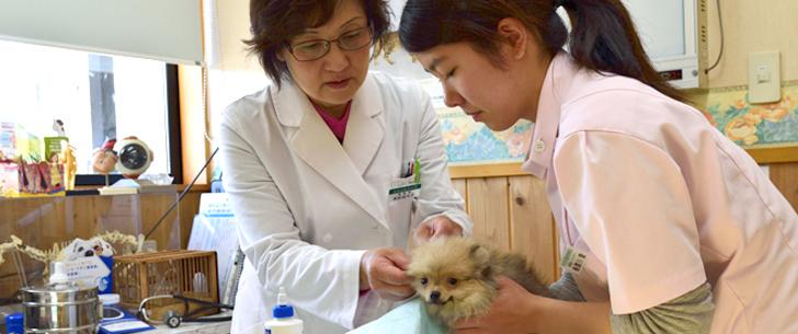 奈良部動物病院  医療環境・医療設備