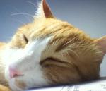cat_small_01