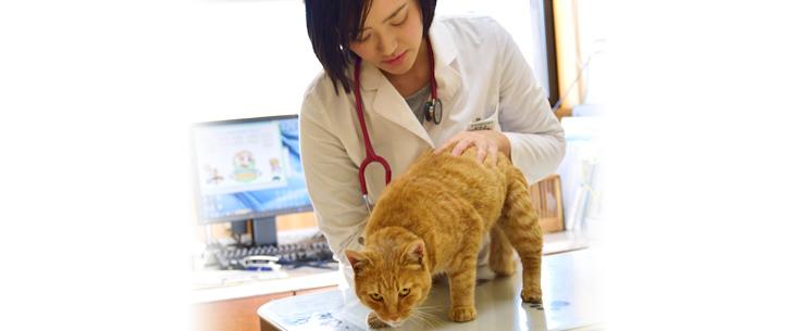 よくあるご質問 奈良部動物病院